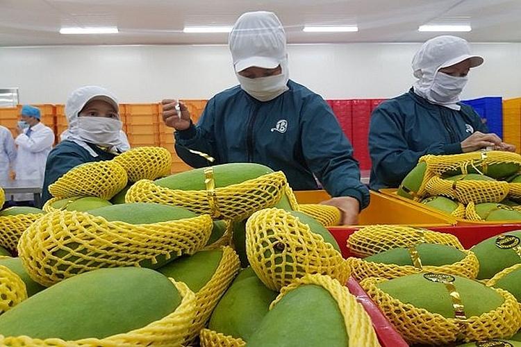 Xuất khẩu rau quả sang EU chiếm chưa tới 1% thị phần