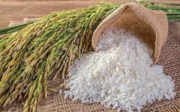 Giá lúa gạo hôm nay 26/10: Giá lúa đồng loạt tăng 100 đồng