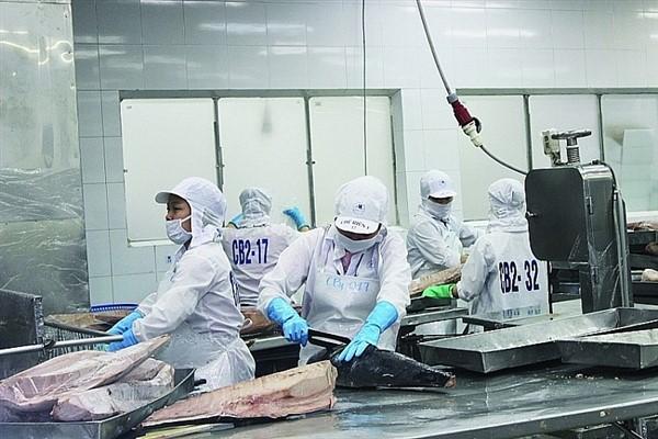 Xuất khẩu cá ngừ sang thị trường Trung Quốc tăng 3 lần