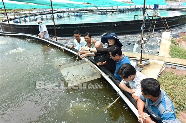 Bạc Liêu: Chỉ thị 06 của Ban Thường vụ huyện Đông Hải - Tạo điều kiện cho con tôm phát triển bền vững