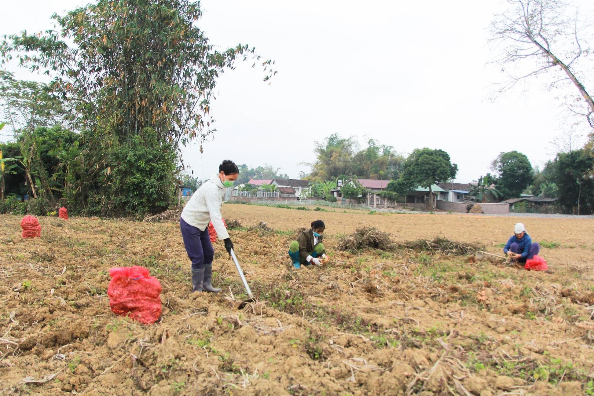 Cao Bằng: Thành phố  - Trên 6 tỷ đồng thực hiện các dự án, mô hình phát triển kinh tế
