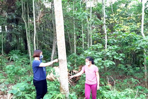 Hà Giang: Trồng rừng gỗ lớn ở Phương Thiện